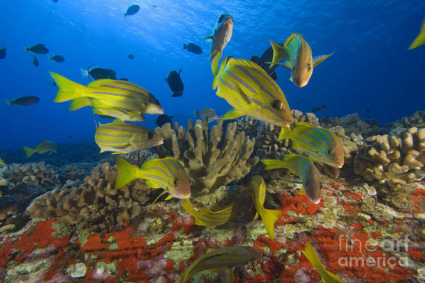Algae Print featuring the photograph Reef Scene by Dave Fleetham - Printscapes