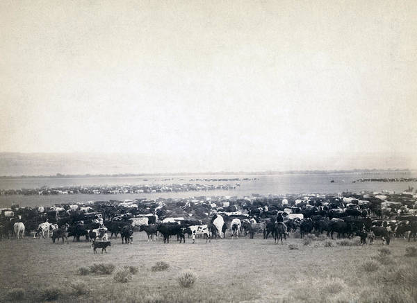 1880s Print featuring the photograph Round-up At Moss Agate, Dakota by Everett