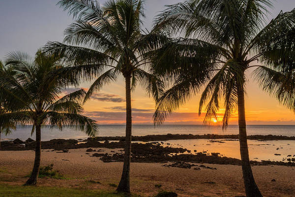 Sharks Cove Palm Tree Sunset Beach North Shore Oahu Hawaii Hi Seascape Print featuring the photograph Sharks Cove Sunset 4 - Oahu Hawaii by Brian Harig