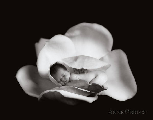 Magnolia Print featuring the photograph Sian In Magnolia by Anne Geddes