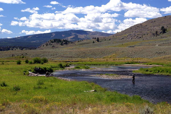 Yellowston National Park Print featuring the photograph Slough Creek Angler by Marty Koch