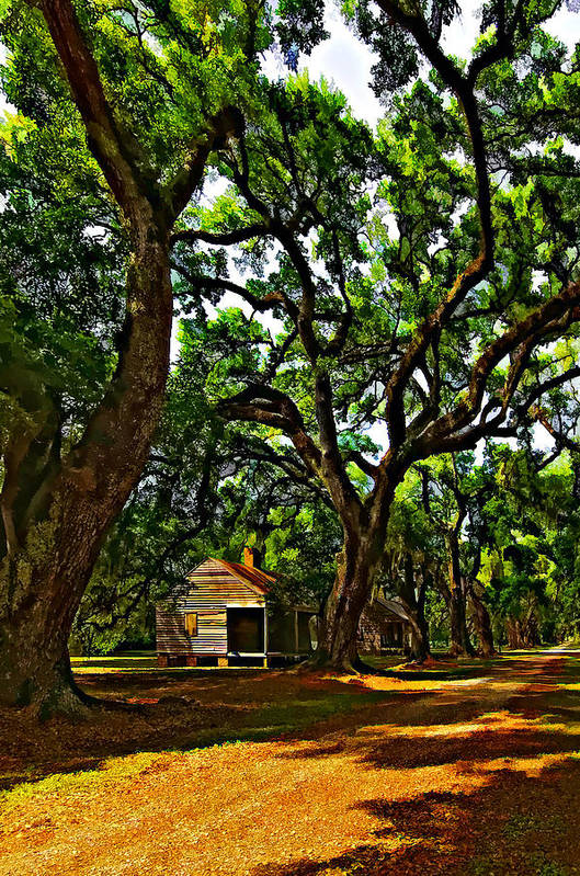 Evergreen Plantation Print featuring the photograph Southern Lane by Steve Harrington