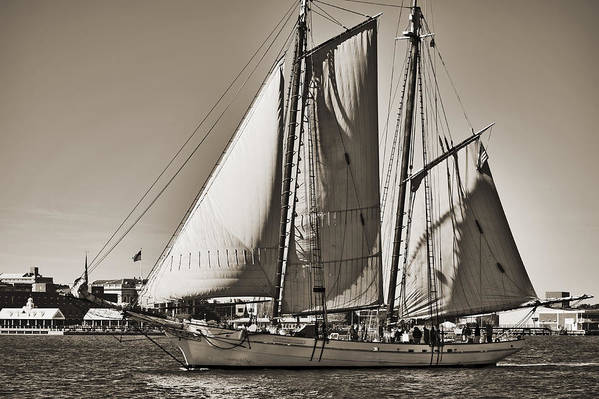 Spirit Of South Carolina Print featuring the photograph Spirit Of South Carolina Schooner Sailboat Sepia Toned by Dustin K Ryan