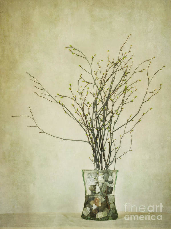 Birch Twigs Print featuring the photograph Spring Unfolds by Priska Wettstein