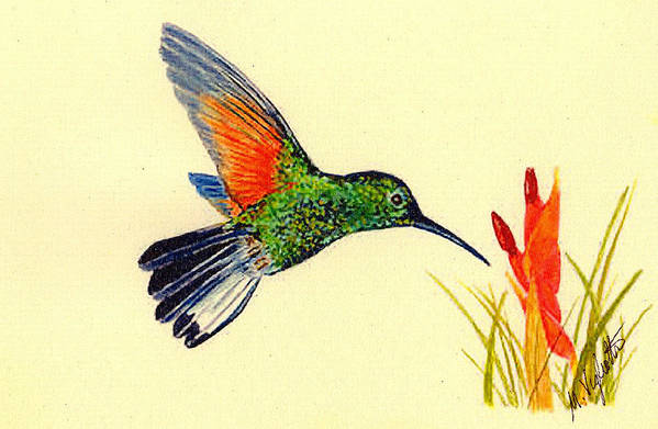 Birds Print featuring the painting Stripe Tailed Hummingbird by Michael Vigliotti