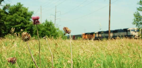 Photo Print featuring the photograph Thistle Rail by Jame Hayes