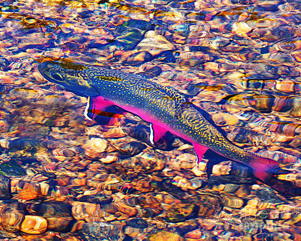 Trout Print featuring the photograph Trout Stream by Terril Heilman