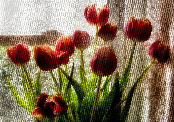 Flower Print featuring the photograph Tulips by Karen M Scovill