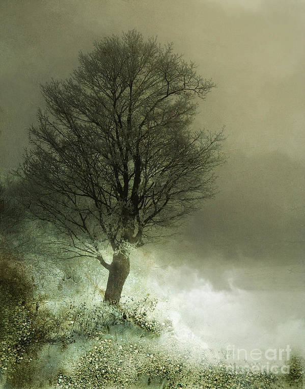Tree Print featuring the photograph Upon The Windowsill Of Heaven by Jan Piller