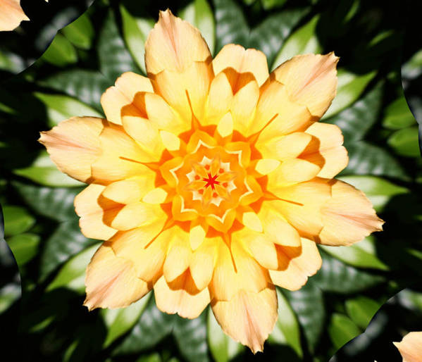 Flowers Print featuring the photograph Yellow Rose Kaleidoscope by Cathie Tyler