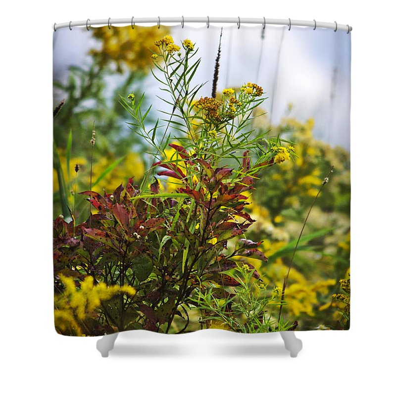 ... to Christina Rollo | Shop > Shower Curtains > Fall Shower Curtains