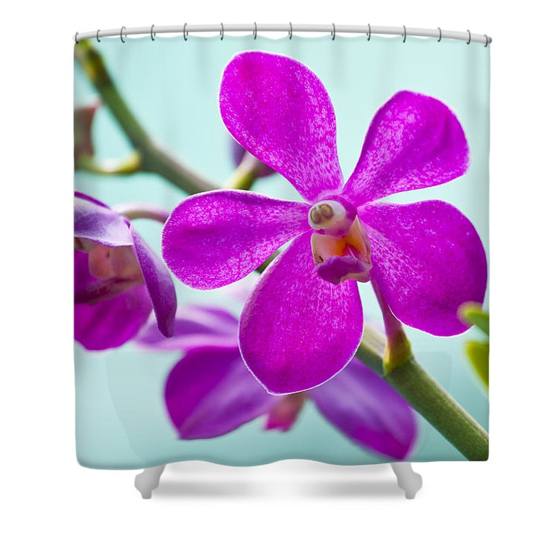 Orchid Shower Curtain featuring the photograph Pink Trio - Orchids by ...