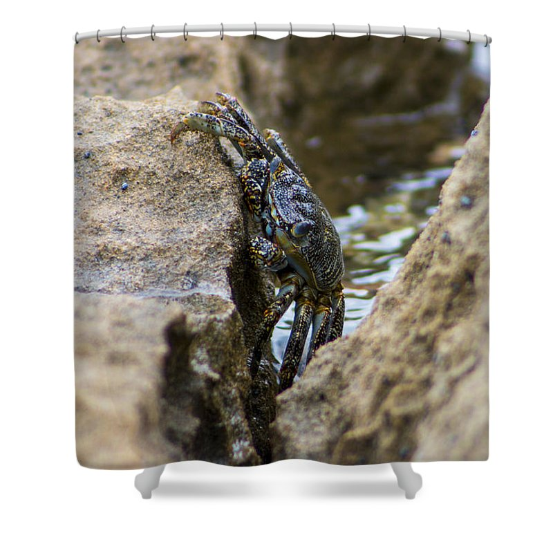 ... to Candalis Escudero | Shop > Shower Curtains > Crab Shower Curtains