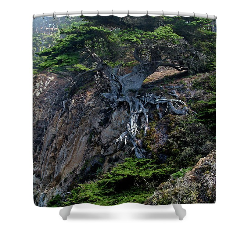 Landscape Shower Curtain featuring the photograph Point Lobos Veteran Cypress Tree by Charlene Mitchell
