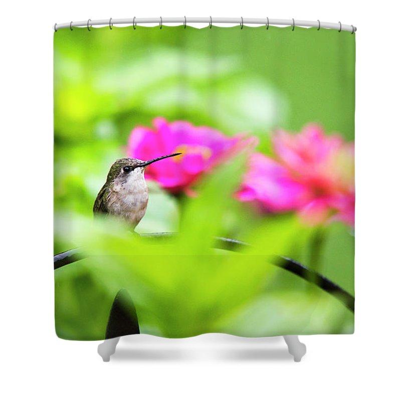 ... Christina Rollo | Shop > Shower Curtains > Hummingbird Shower Curtains