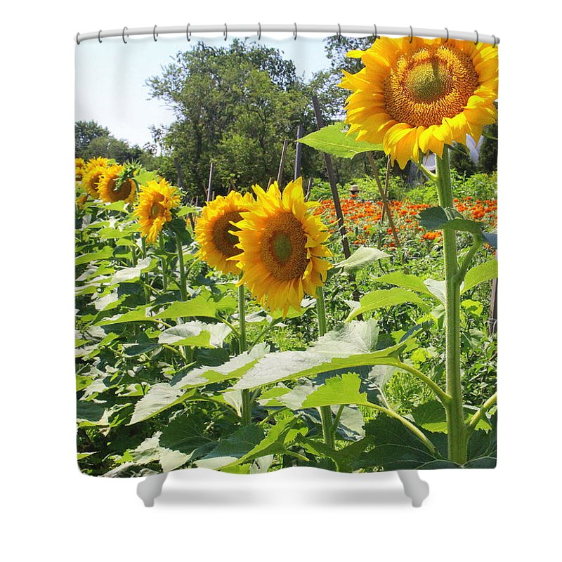 Sunflower Parade Shower Curtain For Sale By Dora Sofia