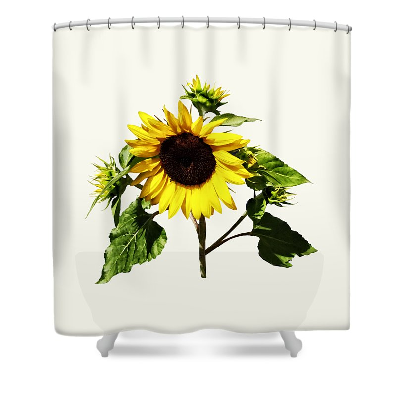 Sunflower Taking A Bow Shower Curtain For Sale By Susan Savad