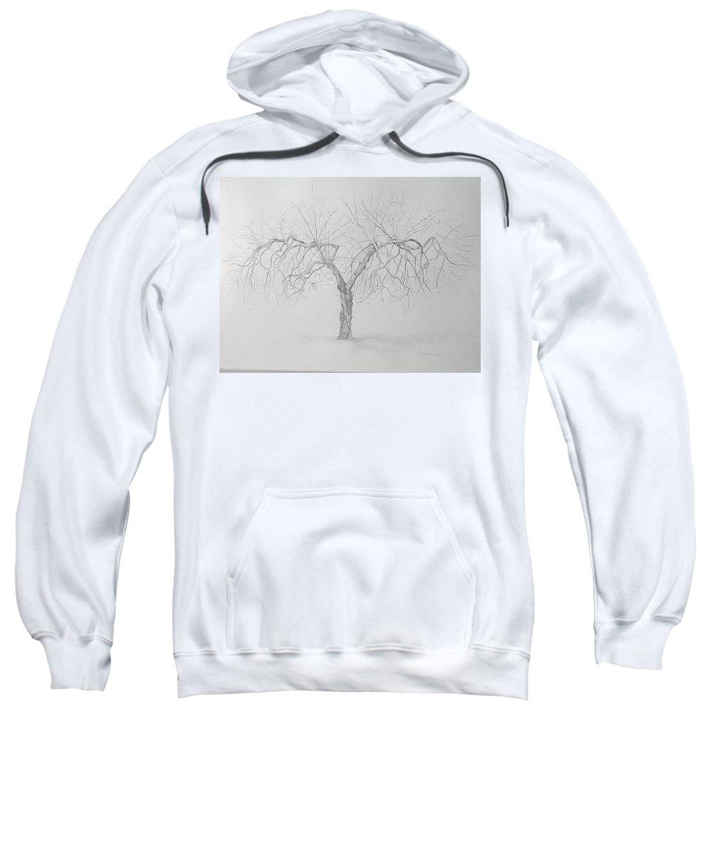 Cortland Apple Tree Sweatshirt featuring the drawing Cortland Apple by Leah Tomaino