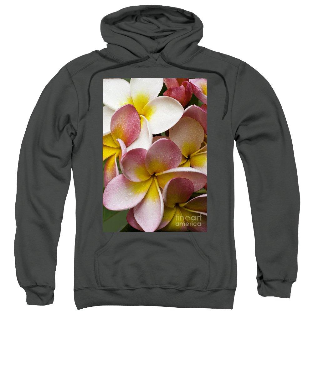 Pink Frangipani Sweatshirt featuring the photograph Pink Frangipani by Avalon Fine Art Photography