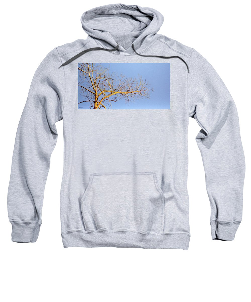 Aspen Painting Sweatshirt featuring the painting Aspen In The Autumn Sun by Elaine Booth-Kallweit