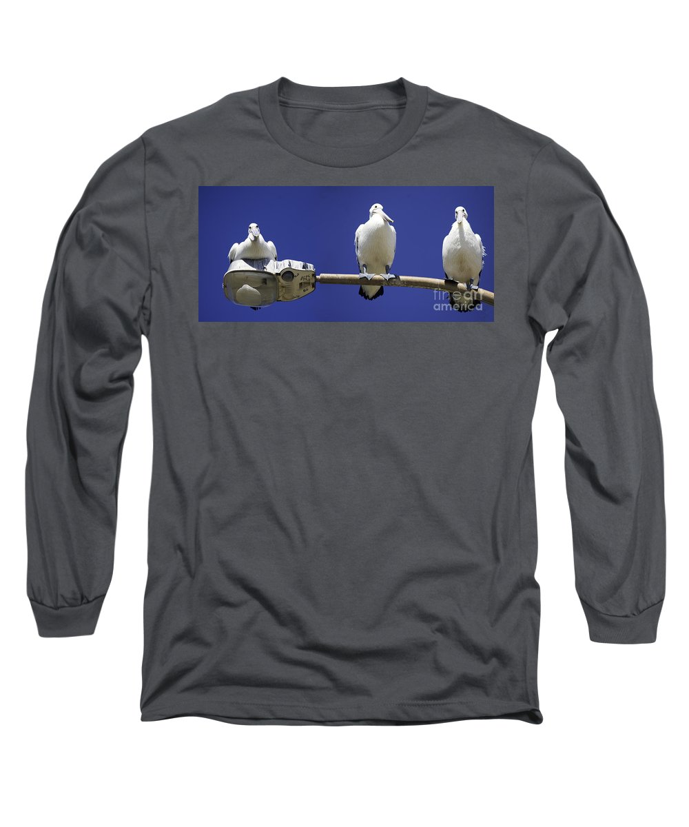 Australian White Pelicans Long Sleeve T-Shirt featuring the photograph Three Pelicans On A Lamp Post by Avalon Fine Art Photography
