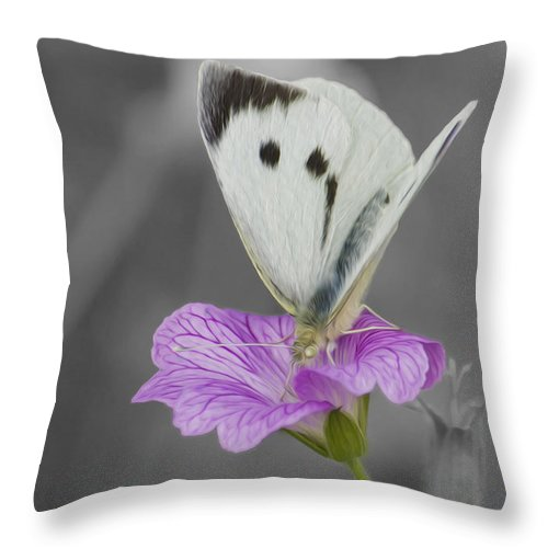 Large White Throw Pillow : Large White Butterfly Throw Pillow for Sale by Veli Bariskan