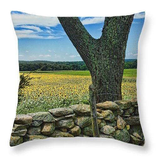 Sunflower Throw Pillow featuring the photograph Buttonwood Farm by Edward Sobuta