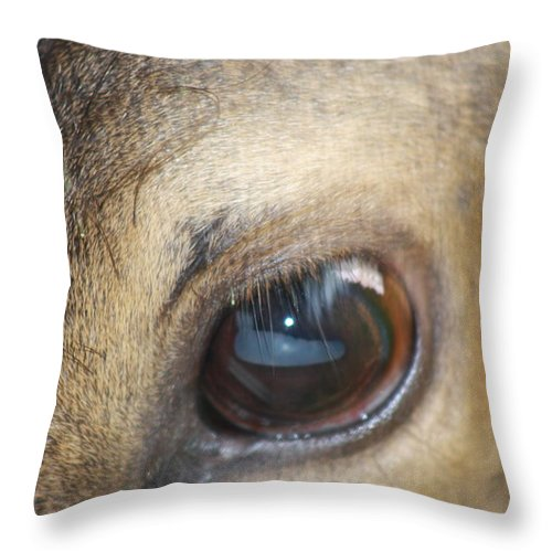 Elk Throw Pillow featuring the photograph Emotion by Cathy Beharriell