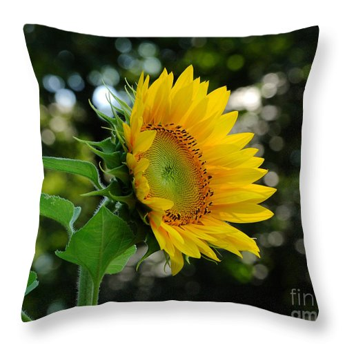 Sunflower Throw Pillow featuring the photograph Good Morning by Edward Sobuta