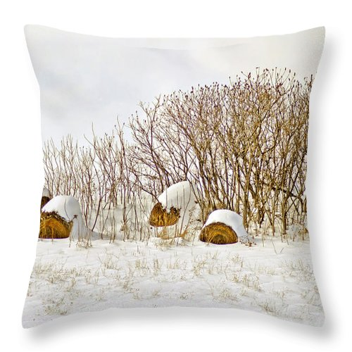 Hay Throw Pillow featuring the photograph Winter Beauty by Deborah Benoit