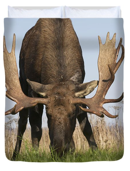 A Large Bull Moose Feeds Near Point Duvet Cover by Doug Lindstrand