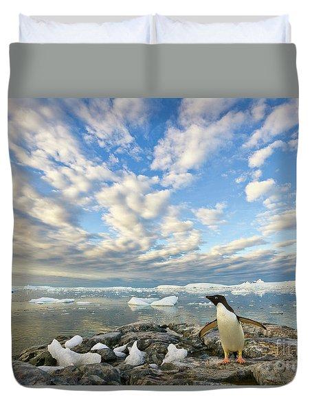 Adelie Penguin Flapping Wings Duvet Cover by Yva Momatiuk John Eastcott