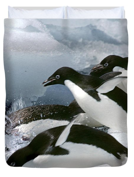Adelie Penguins Duvet Cover by Art Wolfe