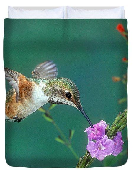 Allens Hummingbird Duvet Cover by Anthony Mercieca