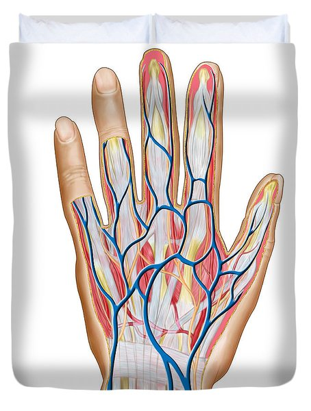 Anatomy Of Back Of Human Hand Duvet Cover by Stocktrek Images