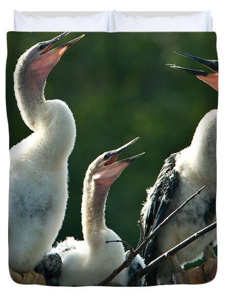 Anhinga Chicks Duvet Cover by Mark Newman