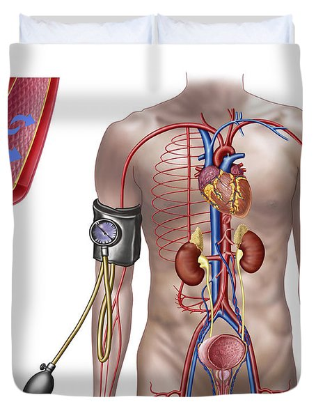 Blood Pressure And Circulatory System Duvet Cover by Stocktrek Images