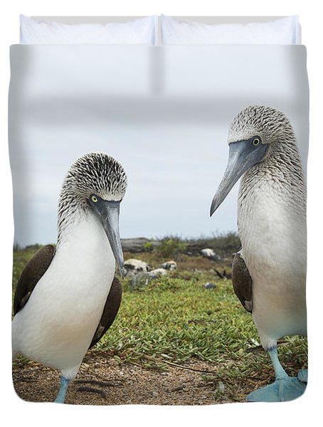 Blue-footed Booby Pair Courting Duvet Cover by Tui De Roy