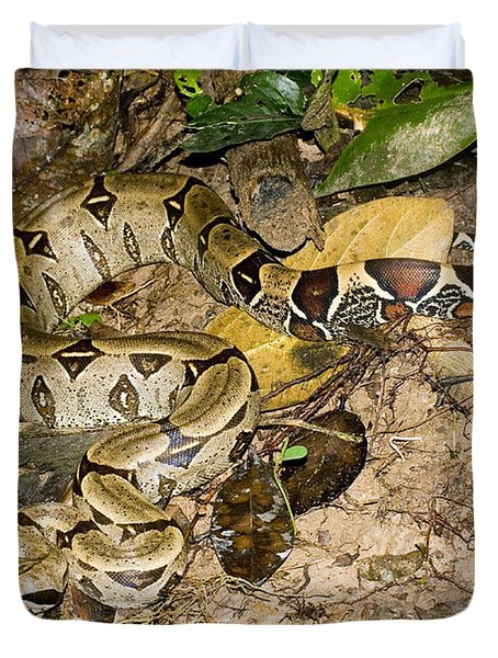 Boa Constrictor Duvet Cover by Gregory G. Dimijian, M.D.