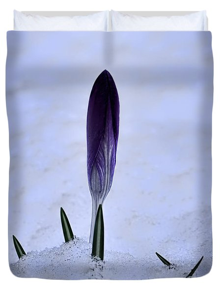 Crocus In Snow Duvet Cover by Leif Sohlman