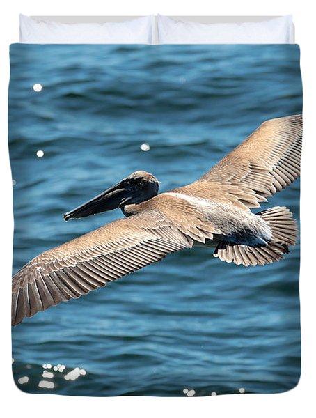 Flying Brown Pelican Wings Photograph By Carol Groenen