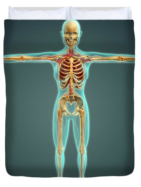 Human Body Showing Skeletal System Duvet Cover by Stocktrek Images