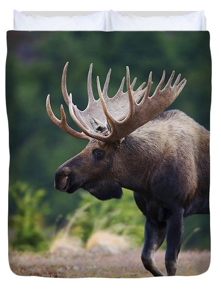 Moose Bull Walking On Autumn Tundra Duvet Cover by Milo Burcham