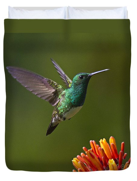 Snowy-bellied Hummingbird Duvet Cover by Heiko Koehrer-Wagner