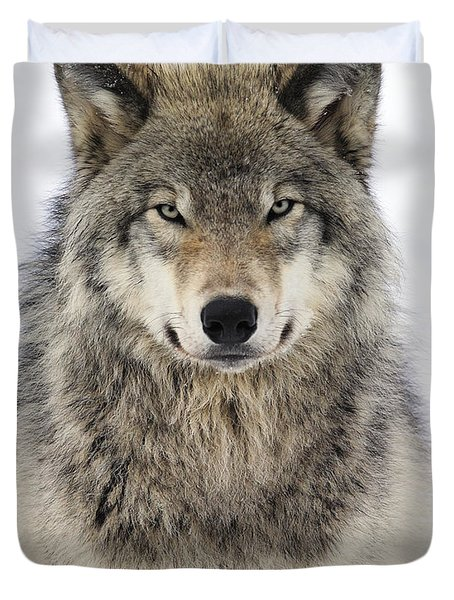 Timber Wolf Portrait Duvet Cover by Tony Beck