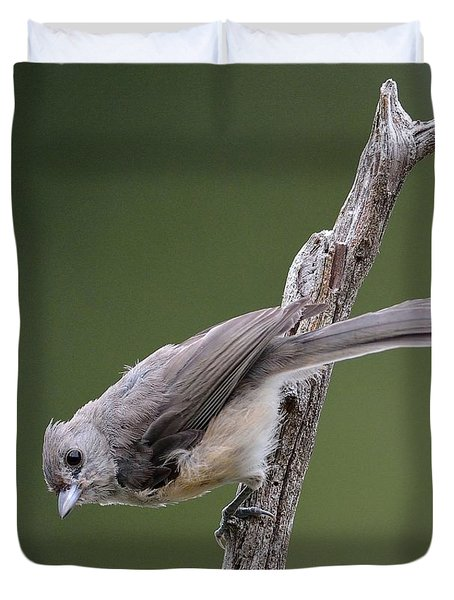Tufted Titmouse Duvet Cover by Todd Hostetter
