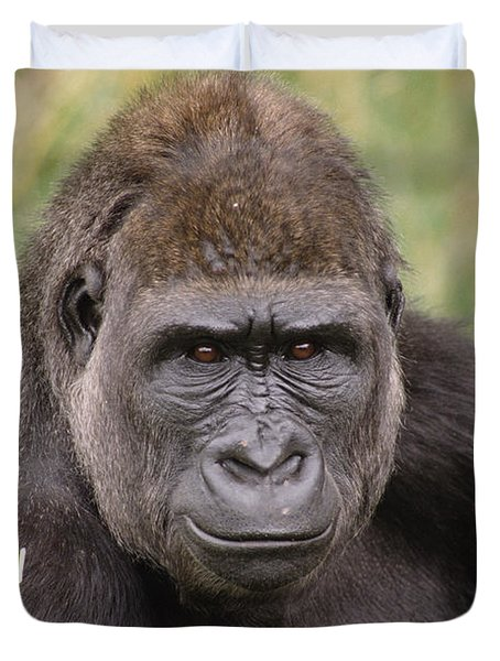 Western Lowland Gorilla Young Male Duvet Cover by Gerry Ellis