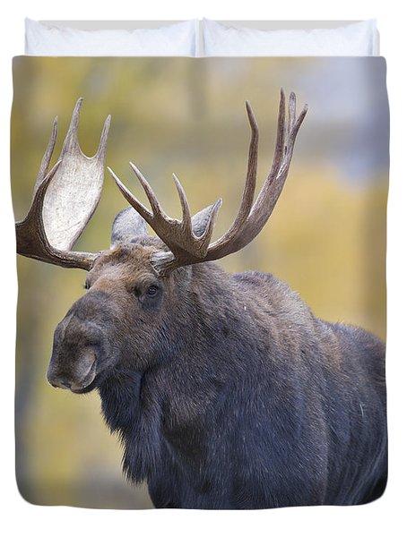 Autumn Bull Moose III Duvet Cover by Gary Langley