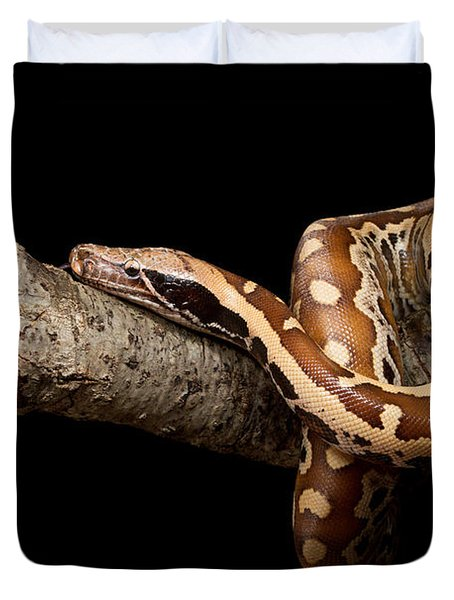 Blood Python Python Brongersmai Duvet Cover by David Kenny