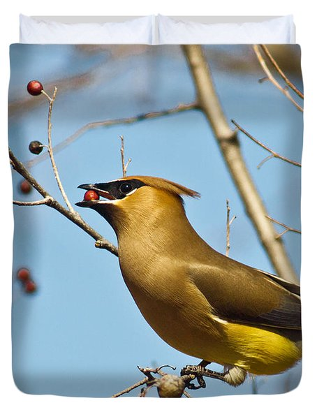 Cedar Waxwing With Berry Duvet Cover by Robert Frederick